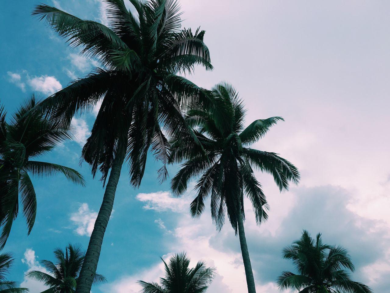 San Fabian Beach Philippines Trees Nature Sky