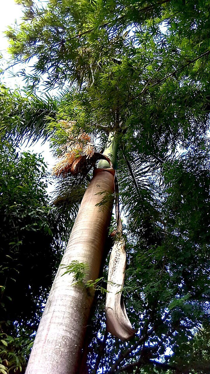 tree, human body part, human hand, one person, real people, forest, outdoors, bamboo - plant, nature, tree trunk, green color, day, growth, low angle view, lifestyles, bamboo grove, men, beauty in nature, close-up, people
