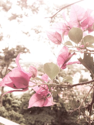 You Name it Flower Pink Color Petal Nature Beauty In Nature Tree Blossom Branch Fragility Springtime Growth No People Freshness Outdoors Close-up Day Plant Low Angle View Flower Head Sky