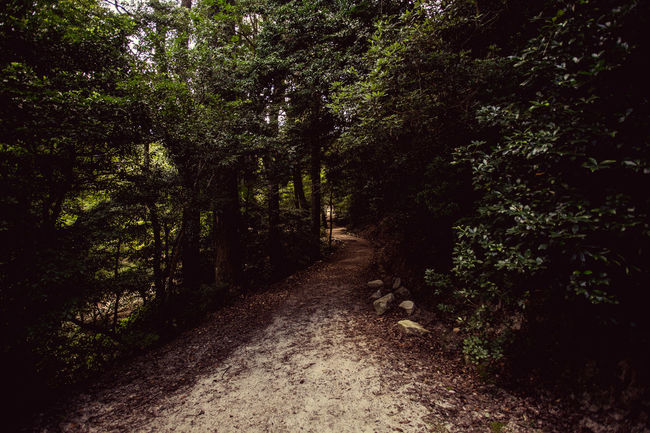 Beauty In Nature Curve Day Diminishing Perspective Empty Road Footpath Forest Garden Green Green Color Growth Long Lush Foliage Messy Narrow Nature No People Non-urban Scene Outdoors Scenics The Way Forward Tranquil Scene Tranquility Tree WoodLand