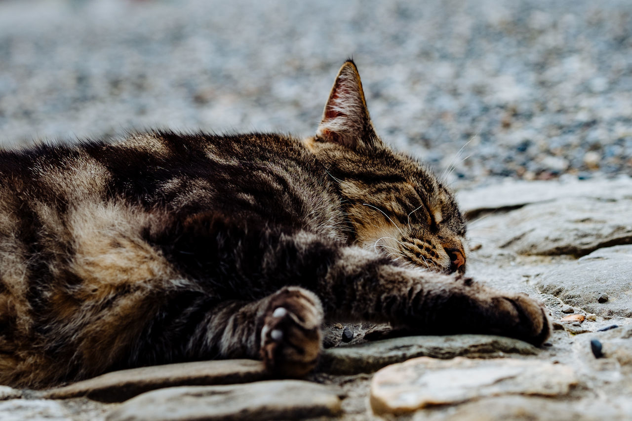Close-Up Of Cat Sleeping On Footpath