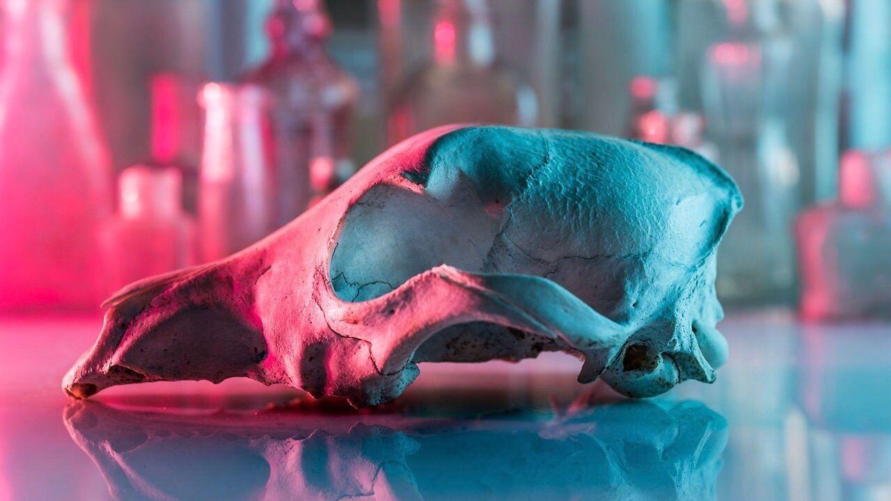 deliciousmonster Plant neon Lifestyle Pink skull bubblegum blue