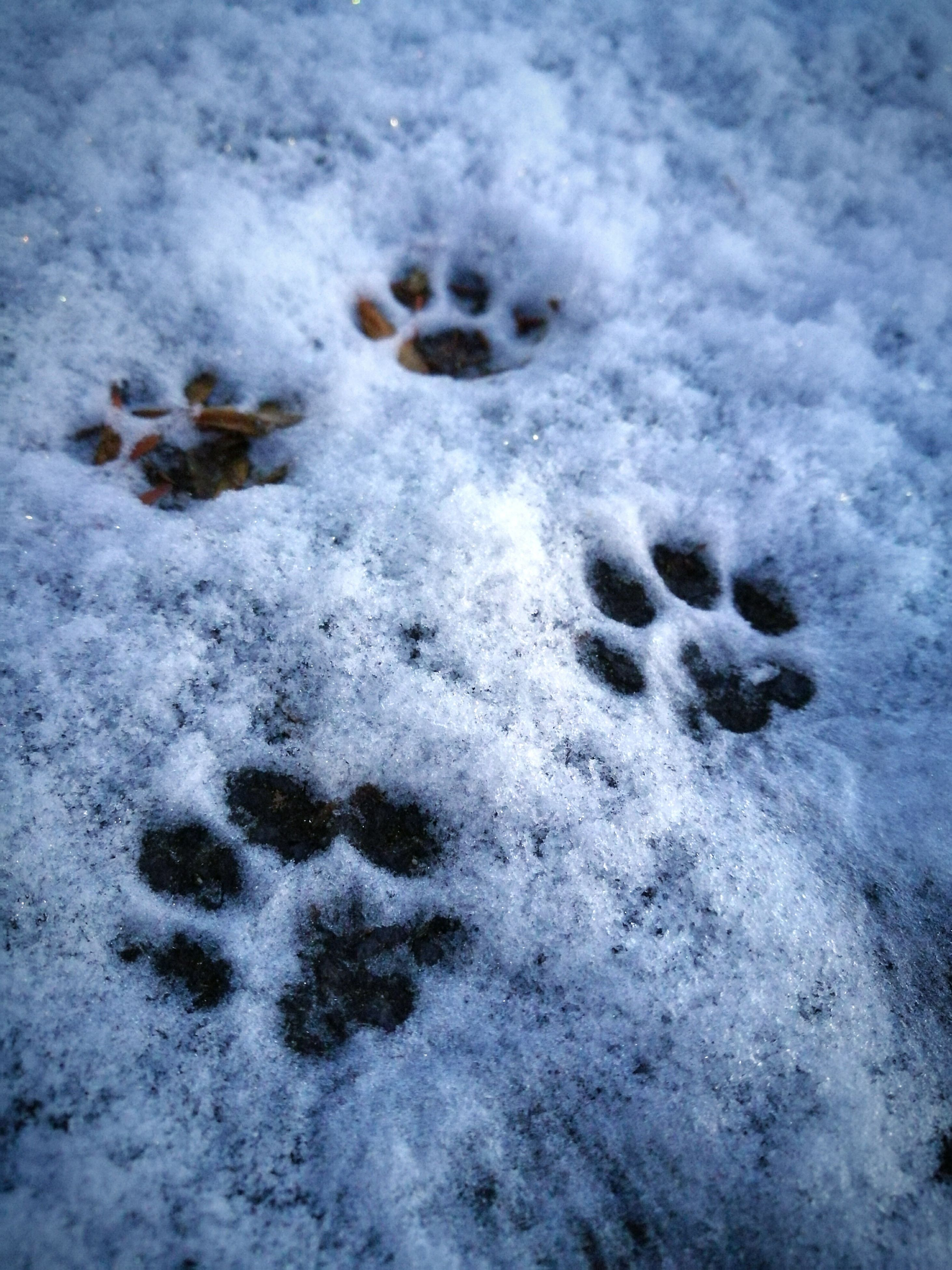winter, snow, cold temperature, paw print, weather, nature, animal track, white color, high angle view, no people, day, outdoors, beauty in nature