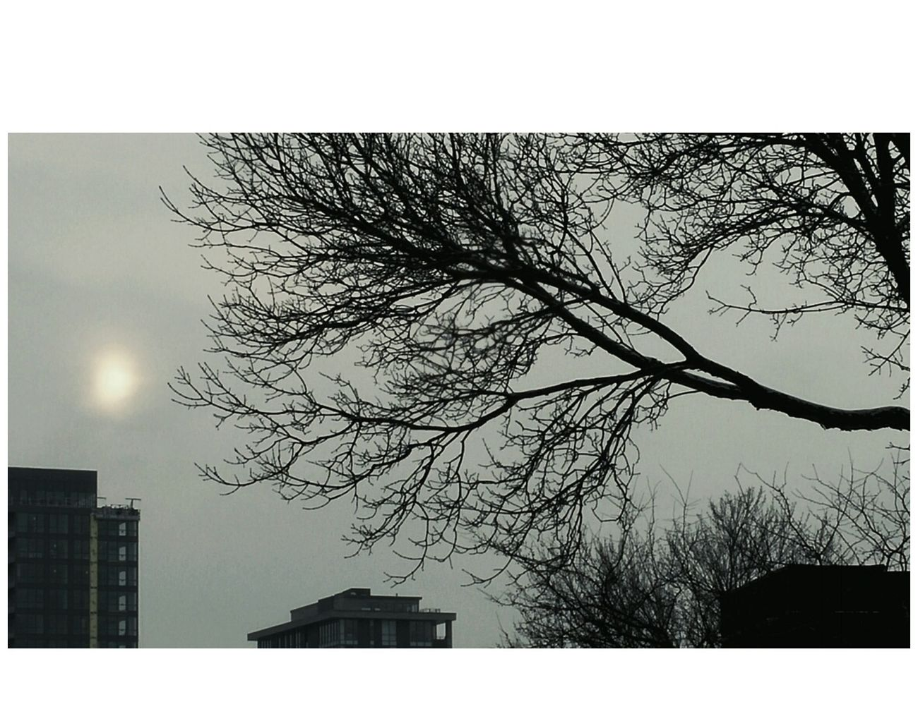 Misty Sun Tree Bare Tree Branch No People Building Exterior Sky Nature Outdoors Built Structure Day Sun Weather Montreal, Canada EyeEm Gallery Cold Temperature Winter 2017 Eyeem Awards Quebec Eye4photography  EyeEm Week City Minimalism_world EyeEm Best Shots Eyeem Canada Morning Sky