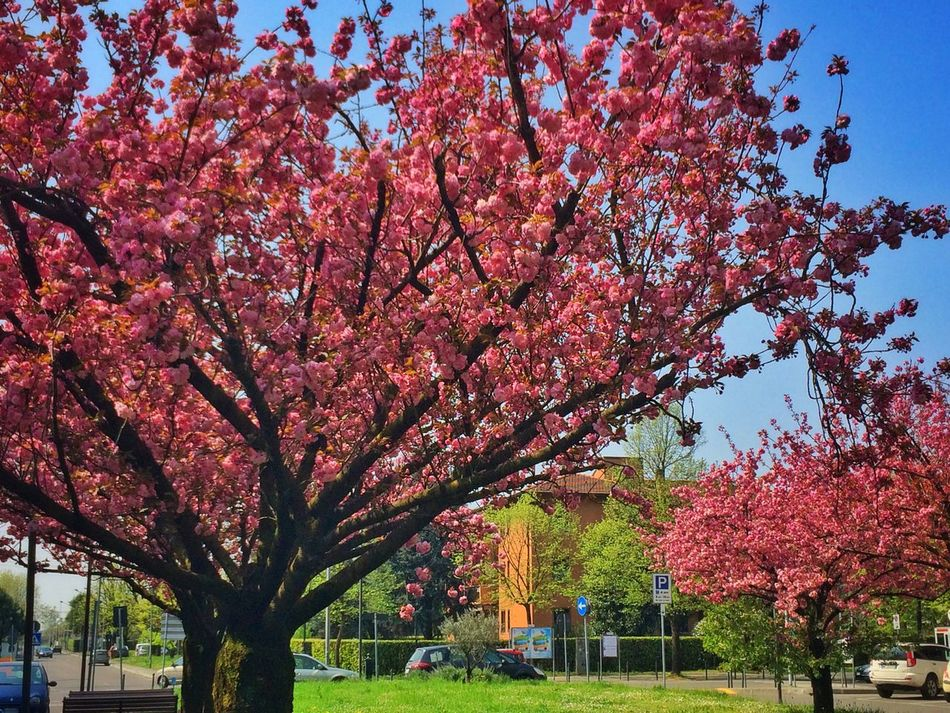 Springtime Spring Home Trees Building Urban Nature Nature_collection Pink Pink Flower Spring Has Arrived
