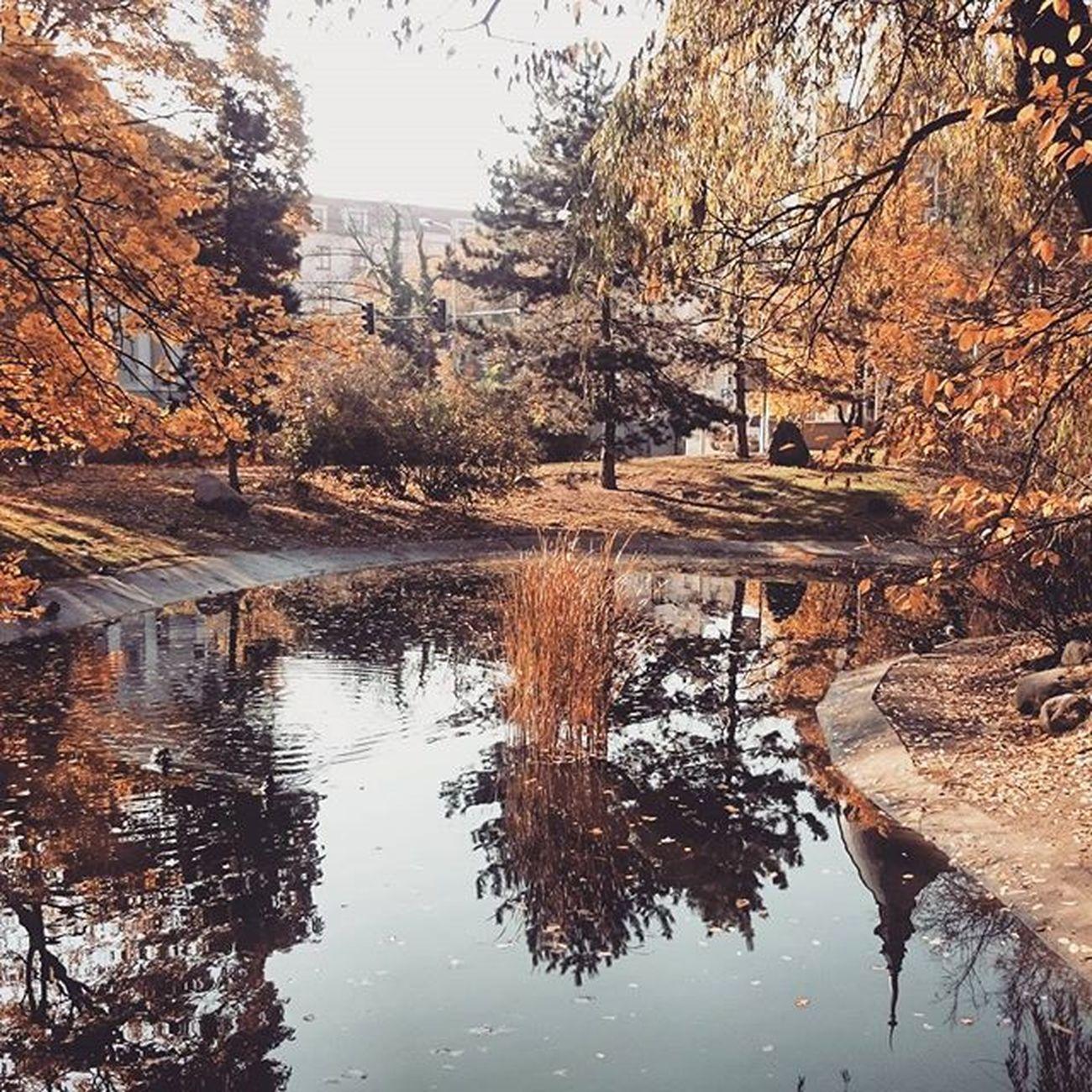 """Pani Jesień w poznańskim """"Central Parku"""" 🌞🍂🍁🍃 Autumn Polishgoldautumn EwaJoannaMatczyńskaPhotography Ideal Perfect Relax Sunny Poznancity Poland Beautiful Nice"""