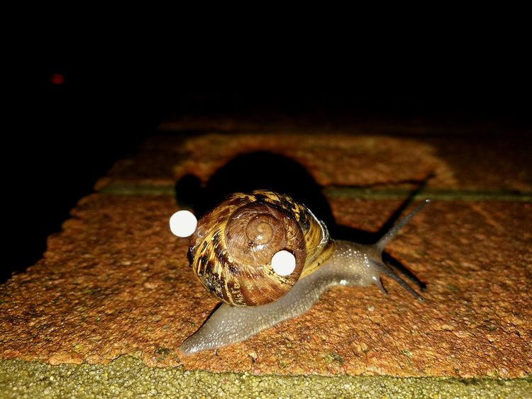 🐌🐌 Snail Close-up Dark No People Outdoors Nightout Rainy Southsea Portsmouth Portsmouthphotographer South Of England United Kingdom Art Is Everywhere