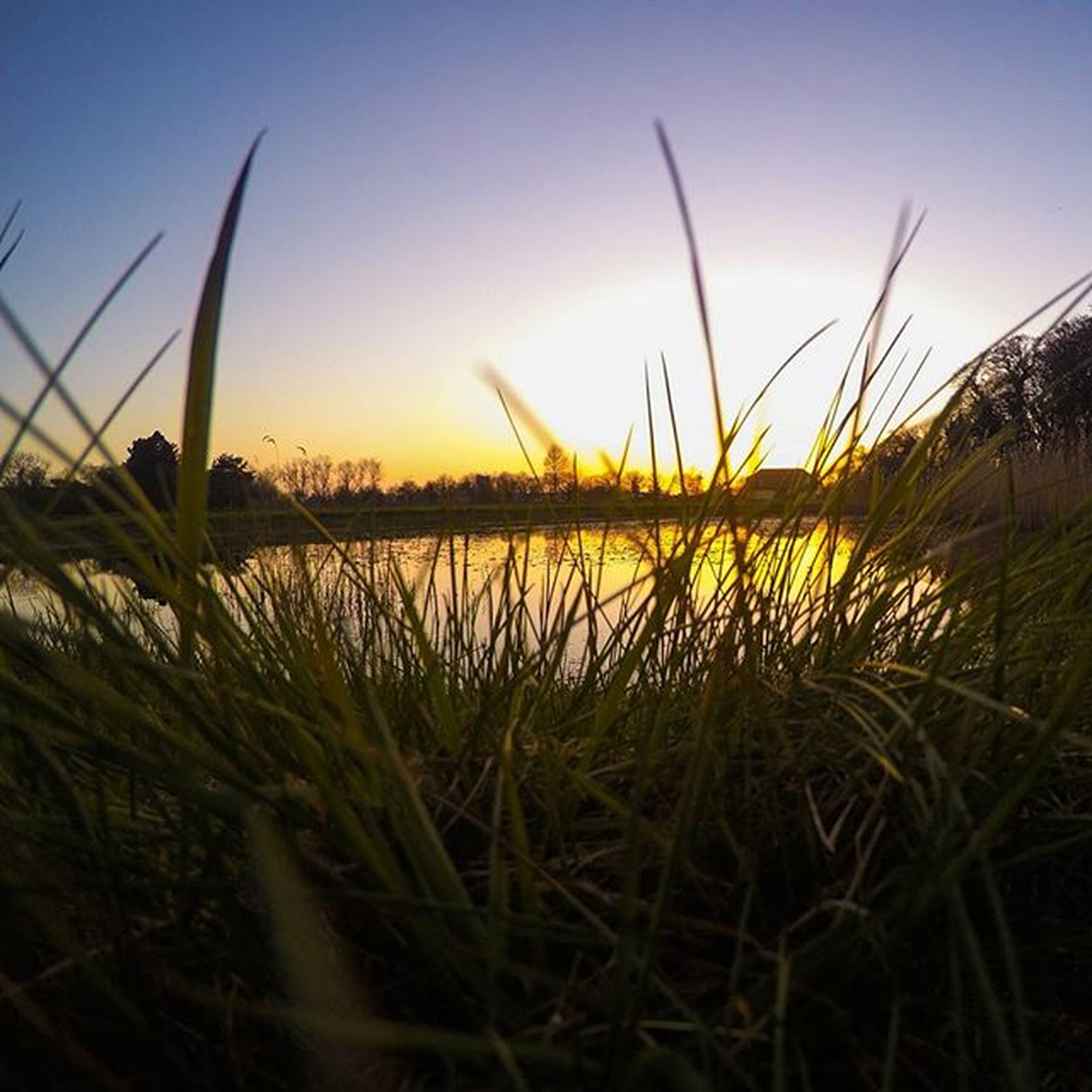 grass, tranquility, water, tranquil scene, plant, growth, beauty in nature, nature, scenics, sunset, clear sky, sky, lake, field, idyllic, growing, outdoors, sunlight, no people, reflection