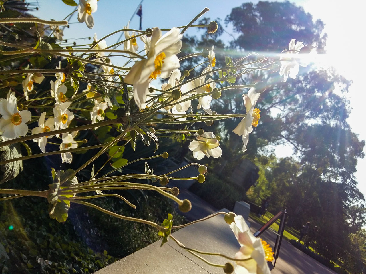 growth, tree, day, nature, outdoors, sunlight, plant, beauty in nature, no people, flower, freshness, close-up, sky