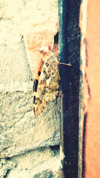 Butterfly Unbelievably Beautiful Beauty In Nature Beautiful