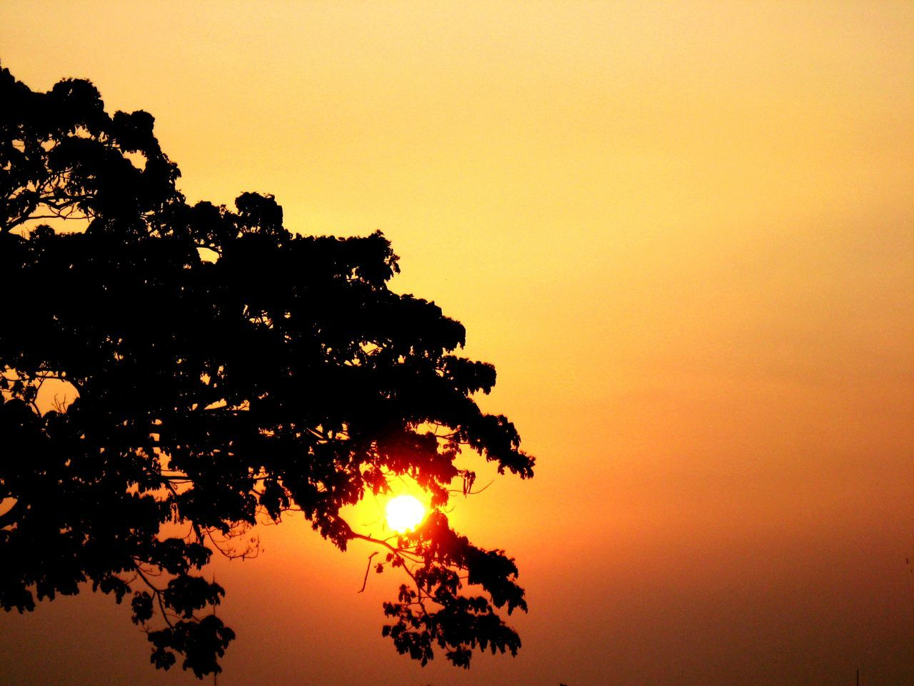 Behind the tree.... Sunset Silouette & Sky Tree Sun Leaves Sky Colorful Sky Dramaticsky Cloudporn Golden Hour Yellowgold Beauty In Nature Summer Time  Manila Philippines