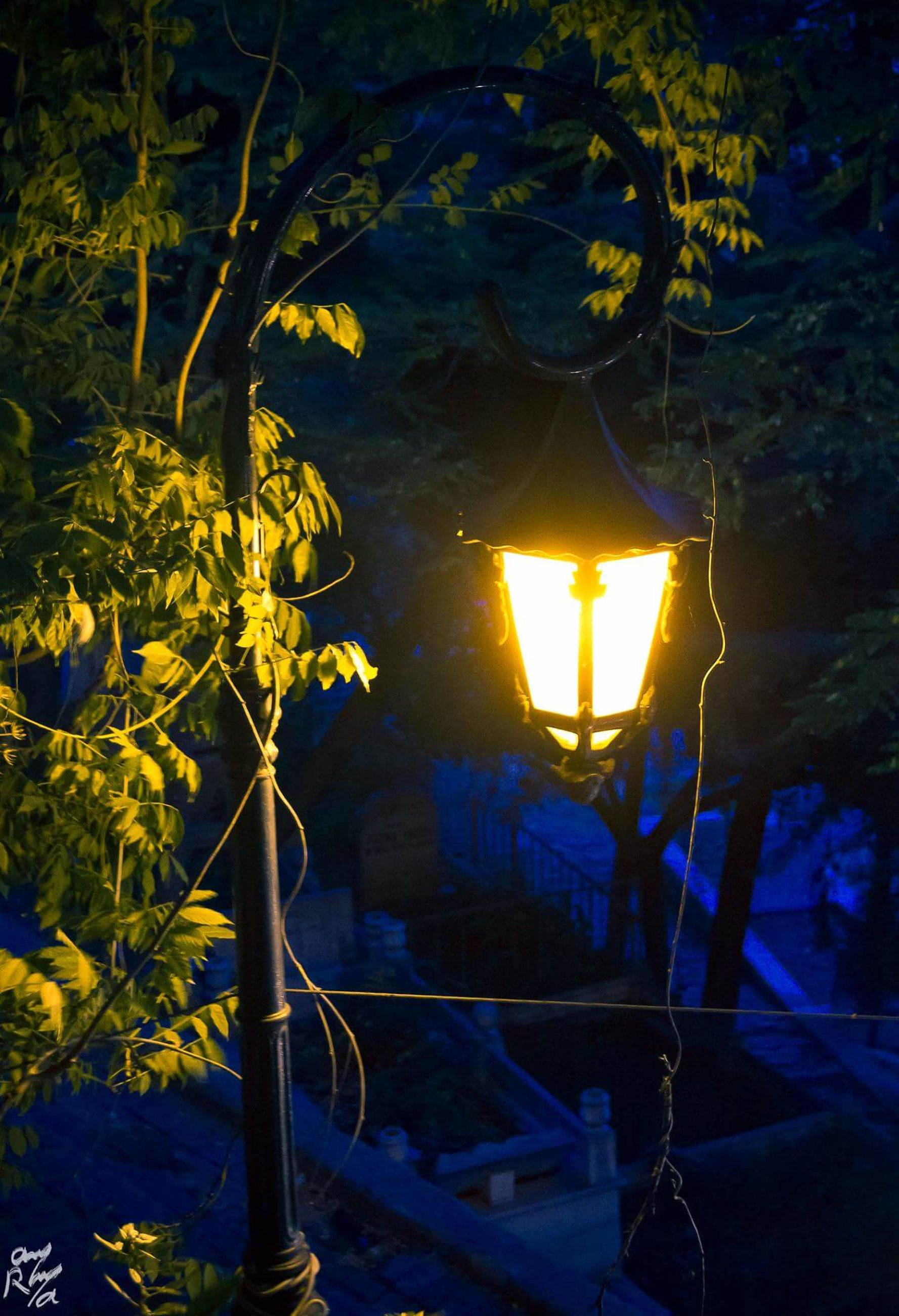 illuminated, night, yellow, no people, outdoors, electricity, tree, nature, close-up