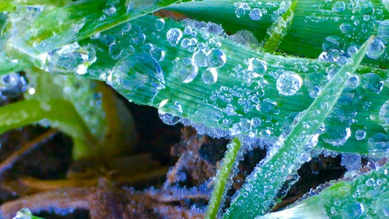 Deepfreeze Tautropfen Wassertropfen My Best Photo 2015 Showcase: December Nature