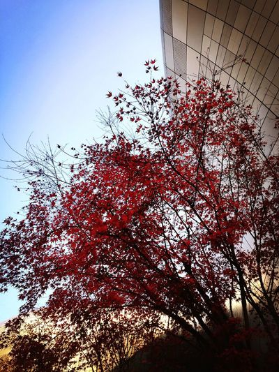 End of Autumn in Seoul..🍁🍁 Autumn Seoul Eye4photography  Mobilephotography EyeEm Best Shots Nature_collection Colours