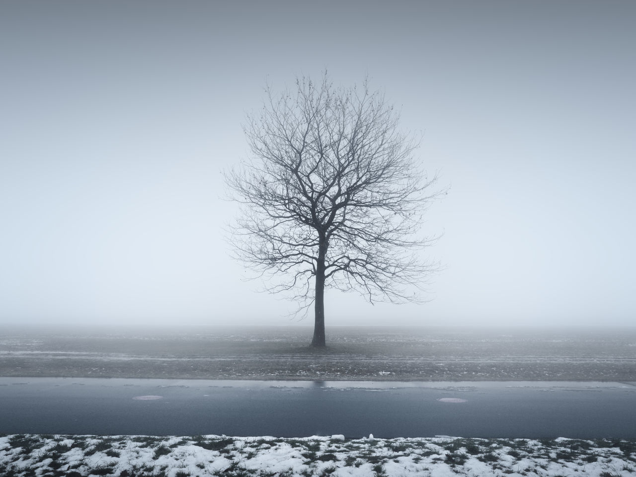 bare tree on field during winter Bare Tree Beauty In Nature Branch Clear Sky Cold Temperature Day Isolated Landscape Lone Majestic Muted Colors Nature No People Outdoors Philipp Dase Remote Scenics Snow Solitude Tranquil Scene Tranquility Tree Tree Trunk Winter