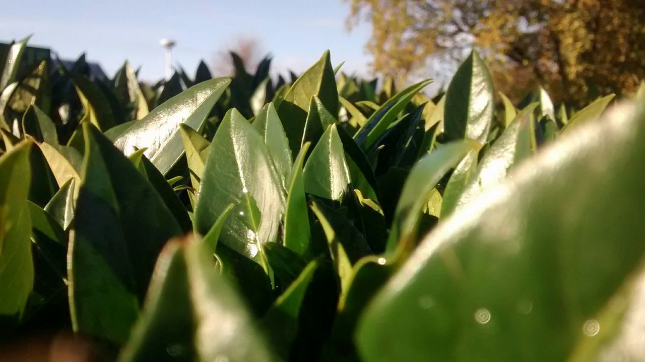 Green Grenery Leaves🌿 Nature Sunlight ☀ Dew Drops Bunch Of Leaves Morning Mobile Photography