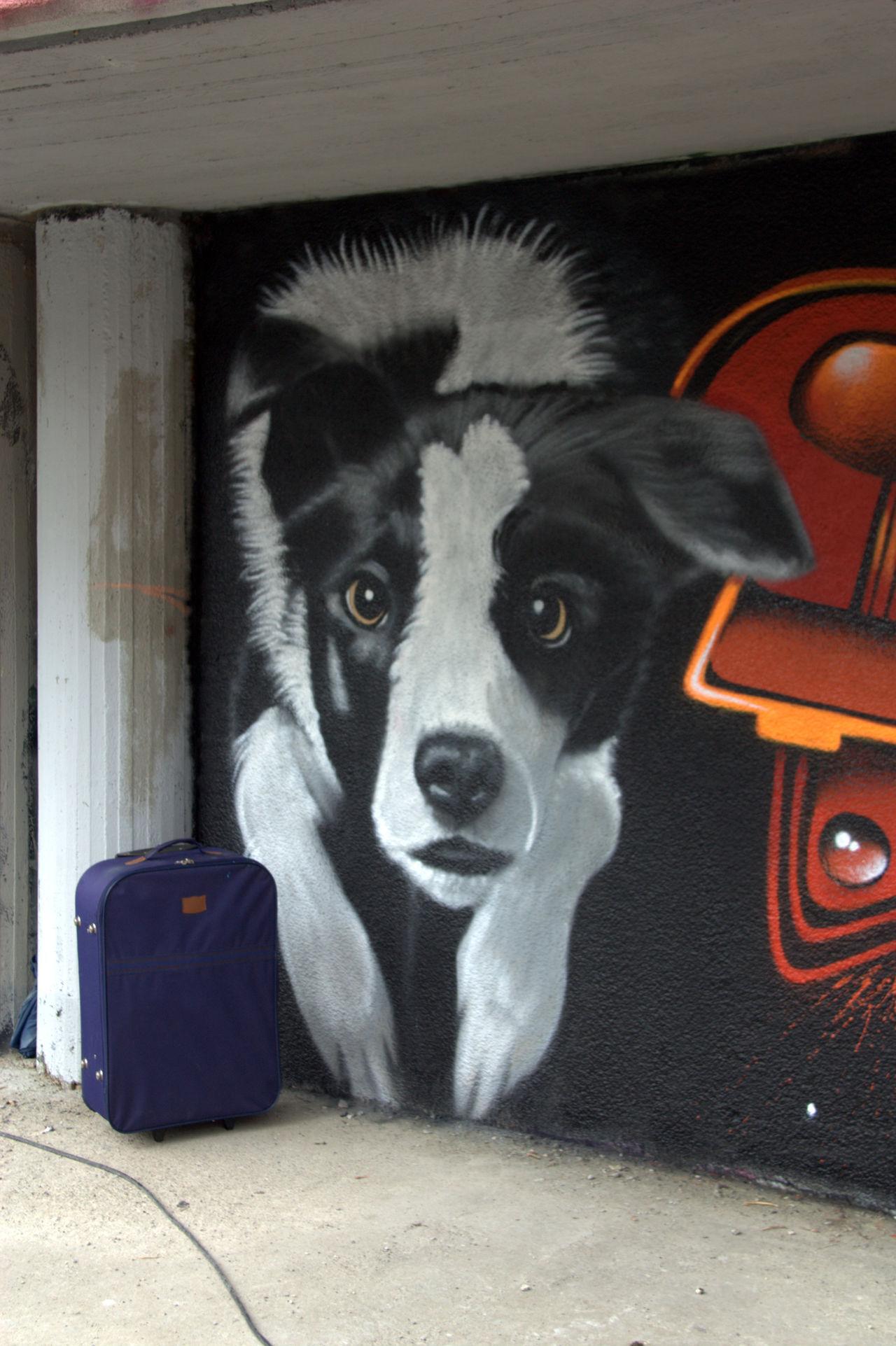 MOS 2016 (Meeting of Styles) 3D Art Colors Day Eyeem Art Lover EyeEm Gallery Graffiti Industrial Wall MOS 2016 (Meeting Of Styles) Murales Muralesart Outdoors Street Art Tag No Tag Tags Dog's Trolley