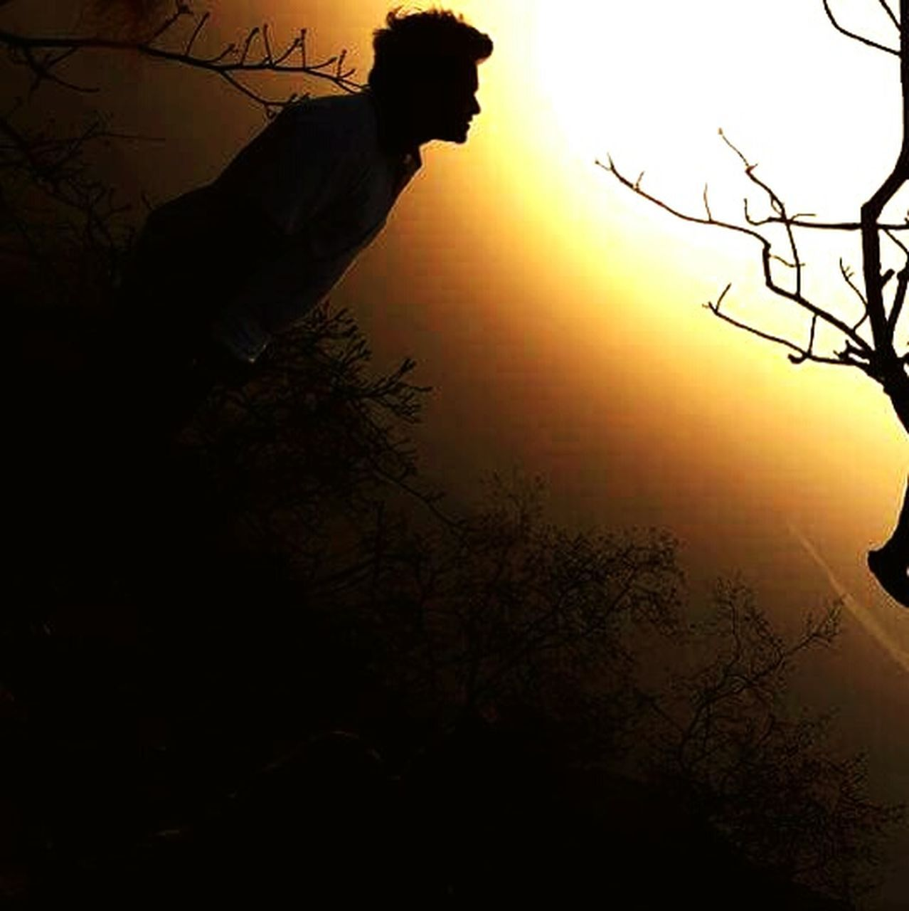 silhouette, sunset, tree, one animal, animal, nature, animal themes, animals in the wild, bare tree, branch, mammal, beauty in nature, outdoors, animal wildlife, sky, no people, scenics, domestic animals, bird, african elephant, day