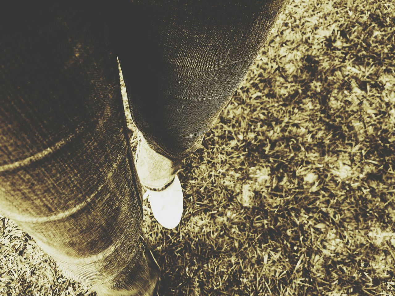 low section, human leg, outdoors, high angle view, one person, day, real people, close-up, standing, nature, one man only, people