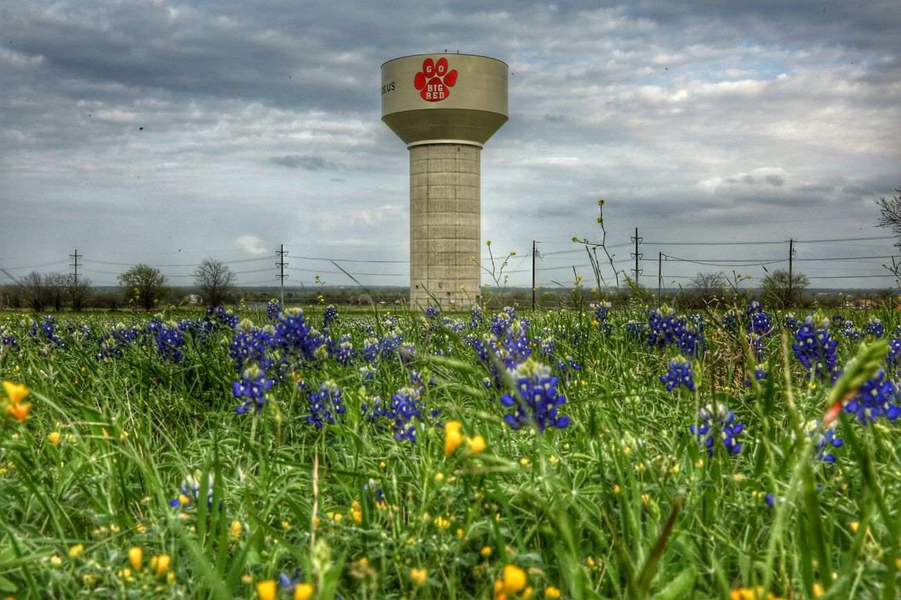 Texas Bluebonnets Flowers Eyeforphotography Taking Photos