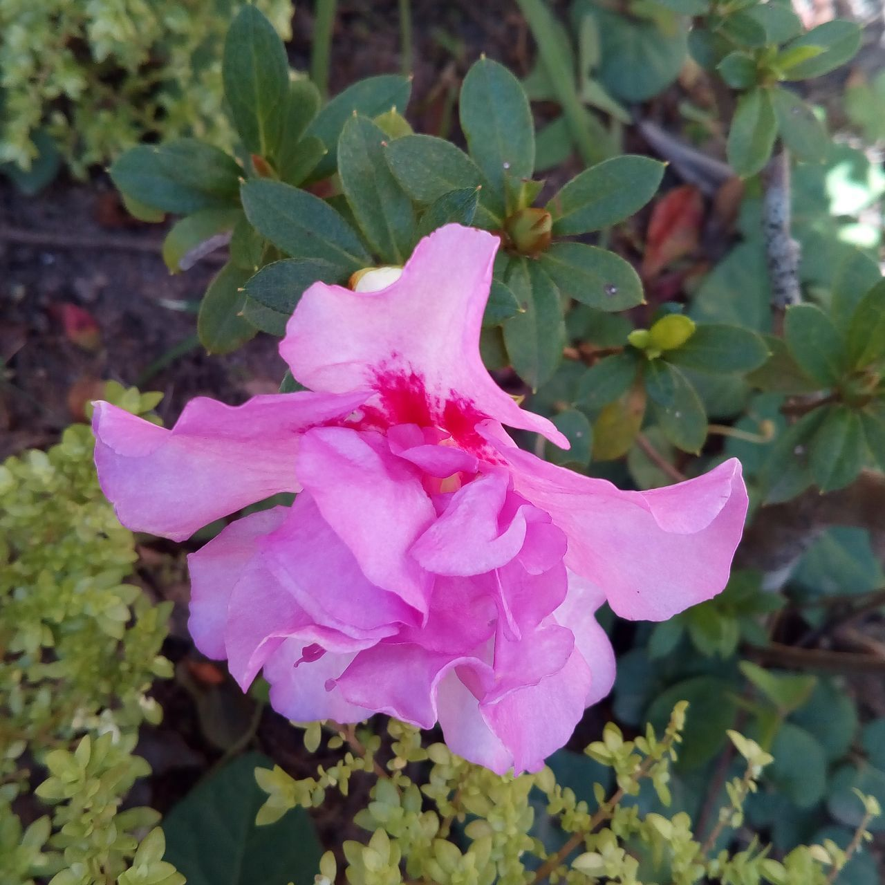 flower, petal, fragility, nature, beauty in nature, plant, pink color, growth, flower head, leaf, no people, outdoors, blooming, wild rose, day, freshness, rose - flower, close-up, periwinkle