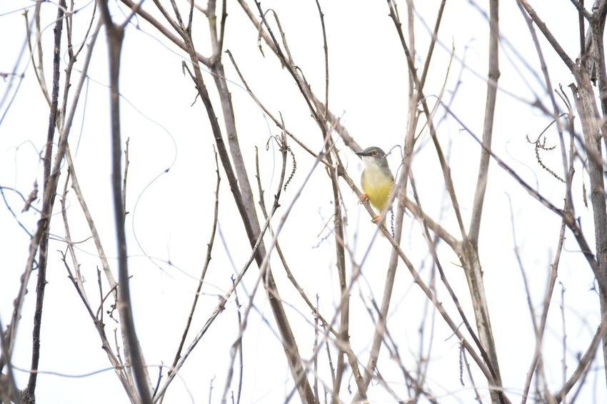 A Bird on the branch Animal Little Bird Birding Bird No People Day Outdoors Branch Hanging Sport Close-up Nature