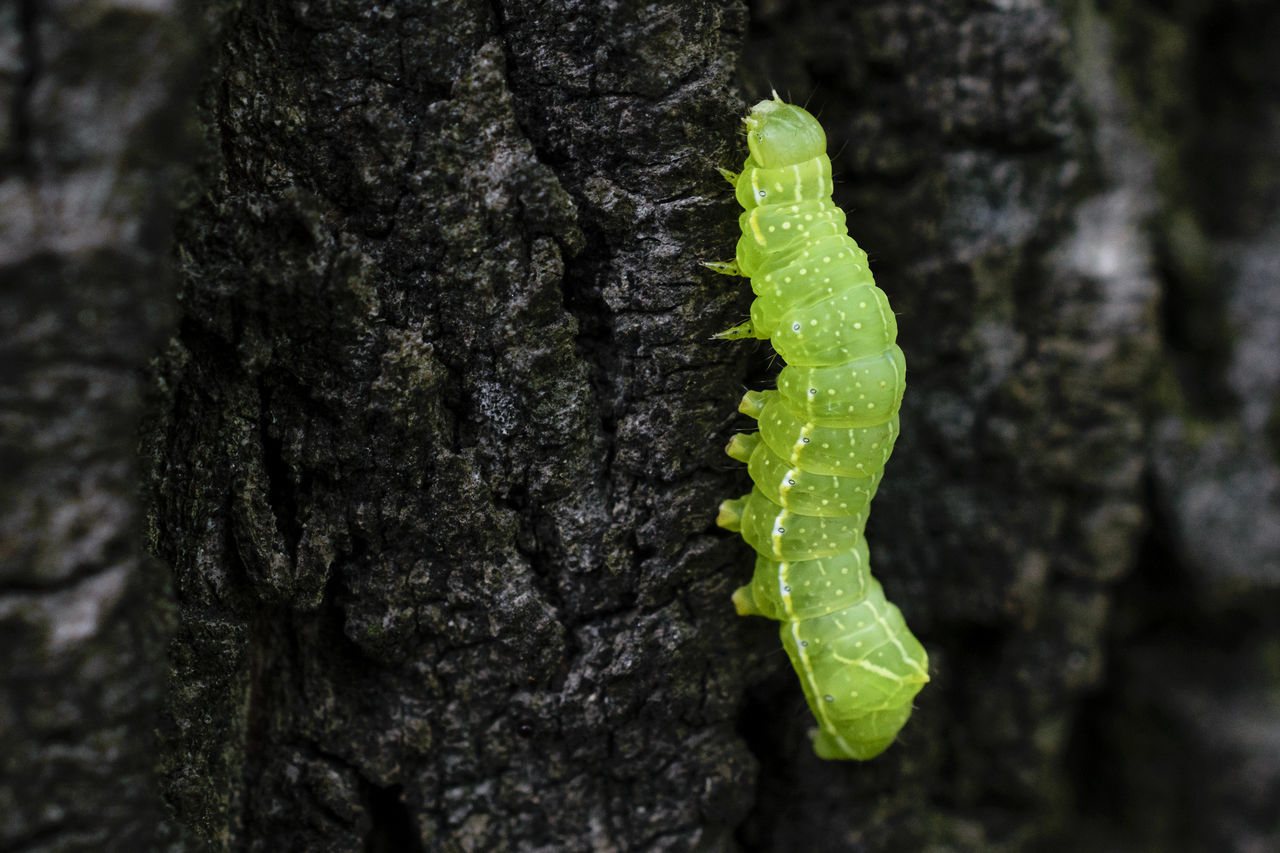 Animal Themes Animals In The Wild Bark Butterfly Caterpillar Catterpillar Change Close-up Day EyeEm Best Shots EyeEm Nature Lover Fragility Green Green Color Growth Insect Insect Photography Insects  Nature Nature_collection No People One Animal Textured  Tree Tree Trunk