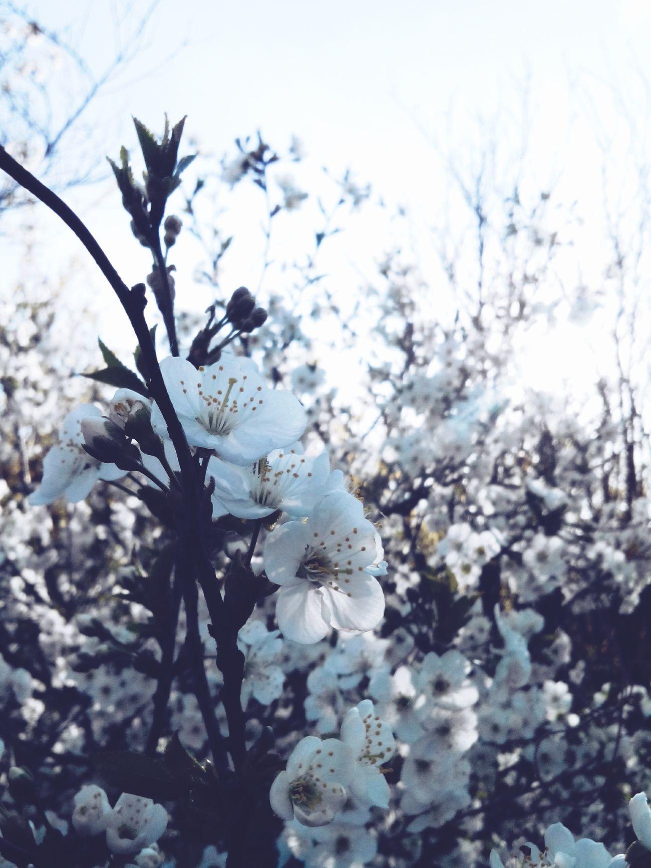 Flowers EyeEm Flower Flowers :) Hello World Flowerpower Spring Flowers Flowerporn Flowers,Plants & Garden Kwiaty Springtime