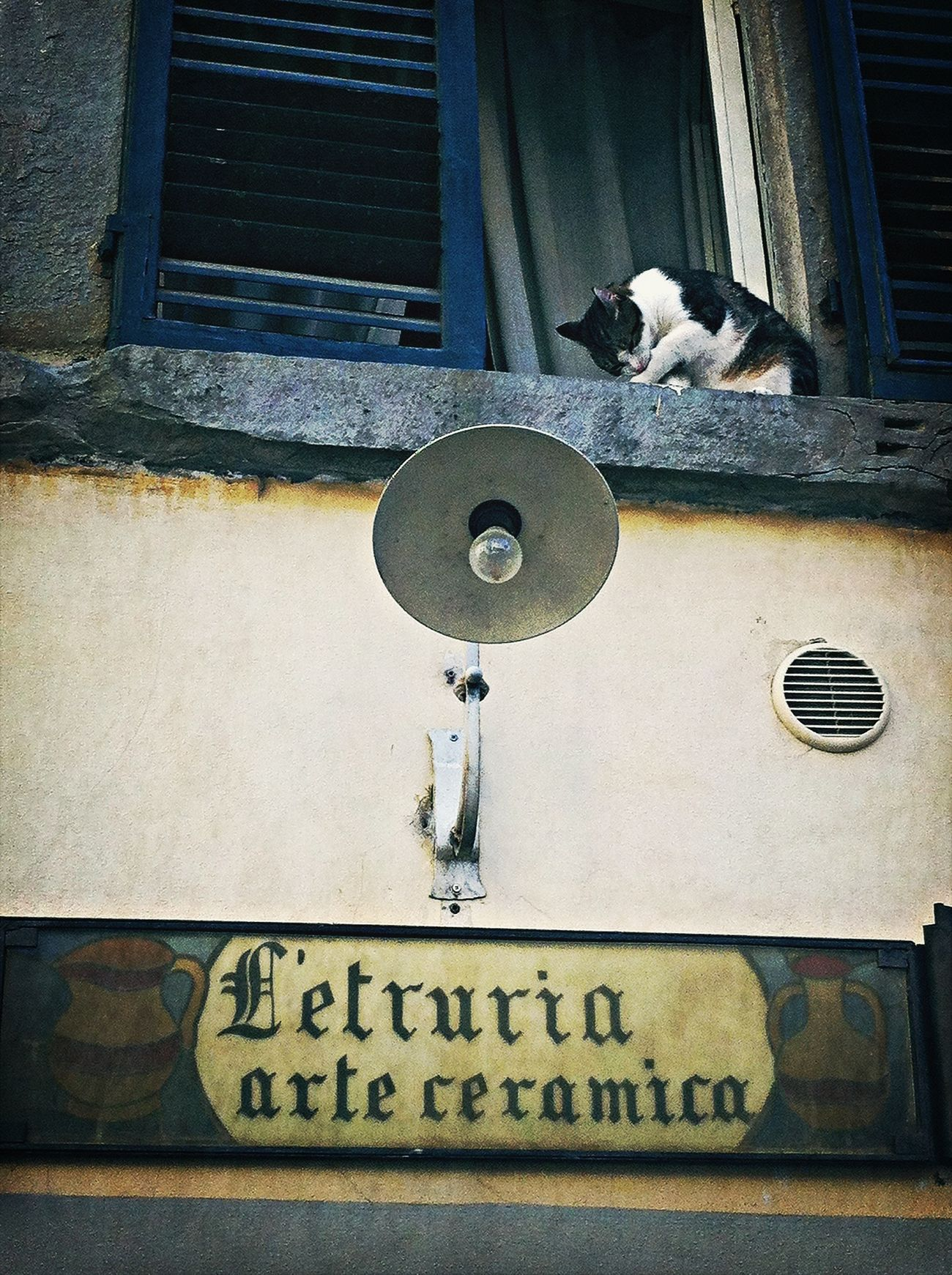 Has visto que guapo me estoy poniendo!!!...y ahora, a la calle! EyeEm Italy Enfocae Bestoftheday EyeEm Best Shots