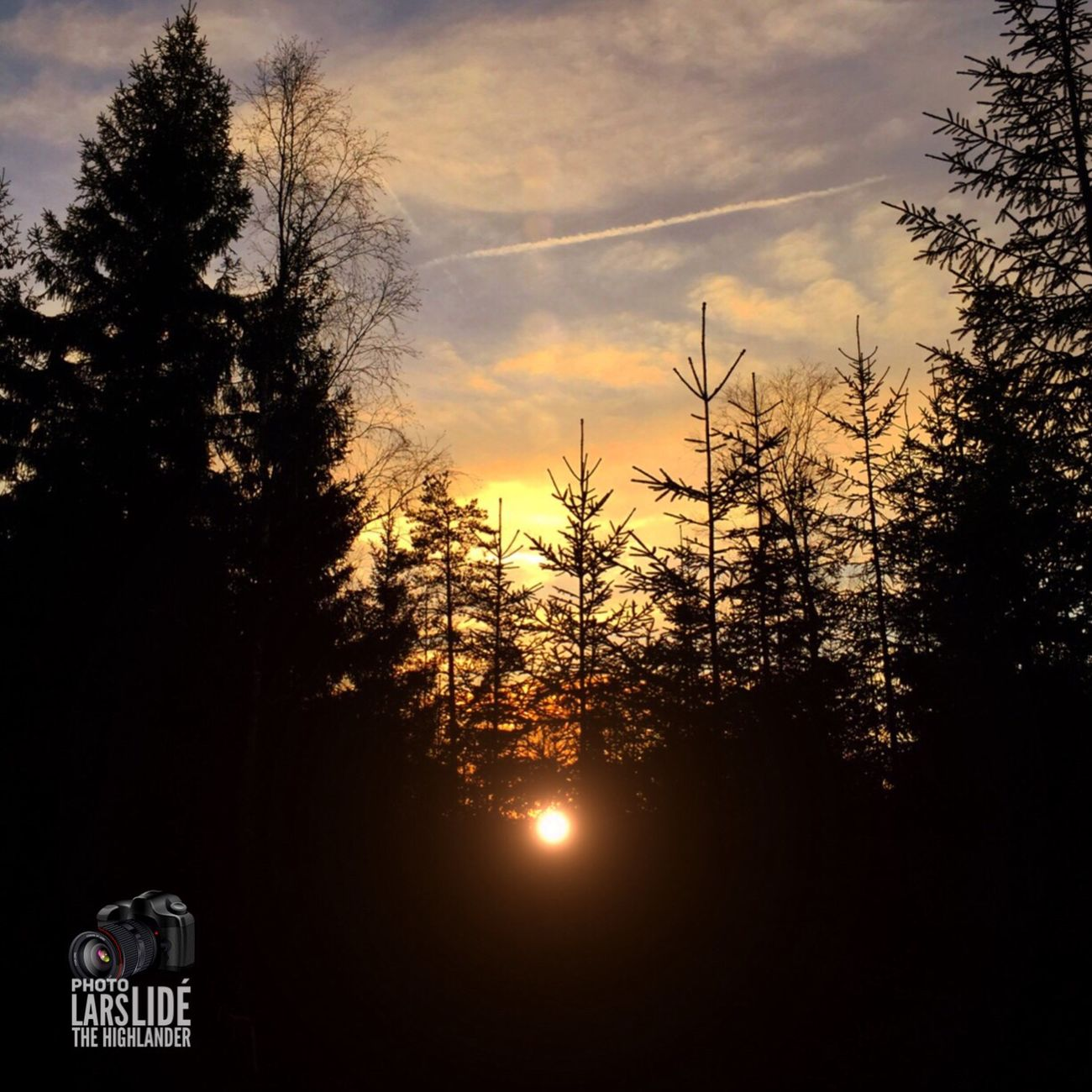 Sunset Tree Sky Silhouette No People Nature Outdoors Beauty In Nature Cloud - Sky Cold Temperature WoodLand Tree Area Wilderness Winter Taking Photos Countryside
