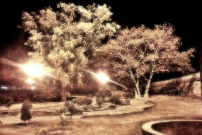Park Night Sky Beauty Pantone Colours By GIZMON