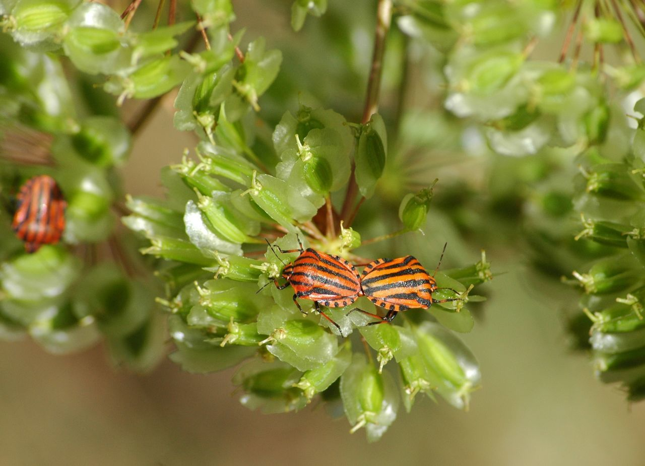 High Angle View Of Bugs Mating On Plant