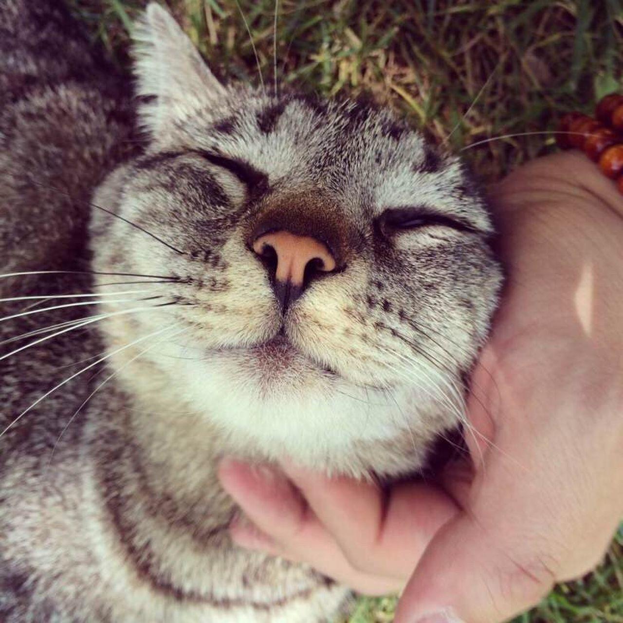 Cat Anmial