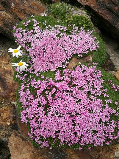 Flower Outdoors Freshness No People Beauty In Nature Day Plant Nature High Angle View Close-up Fragility Flower Head
