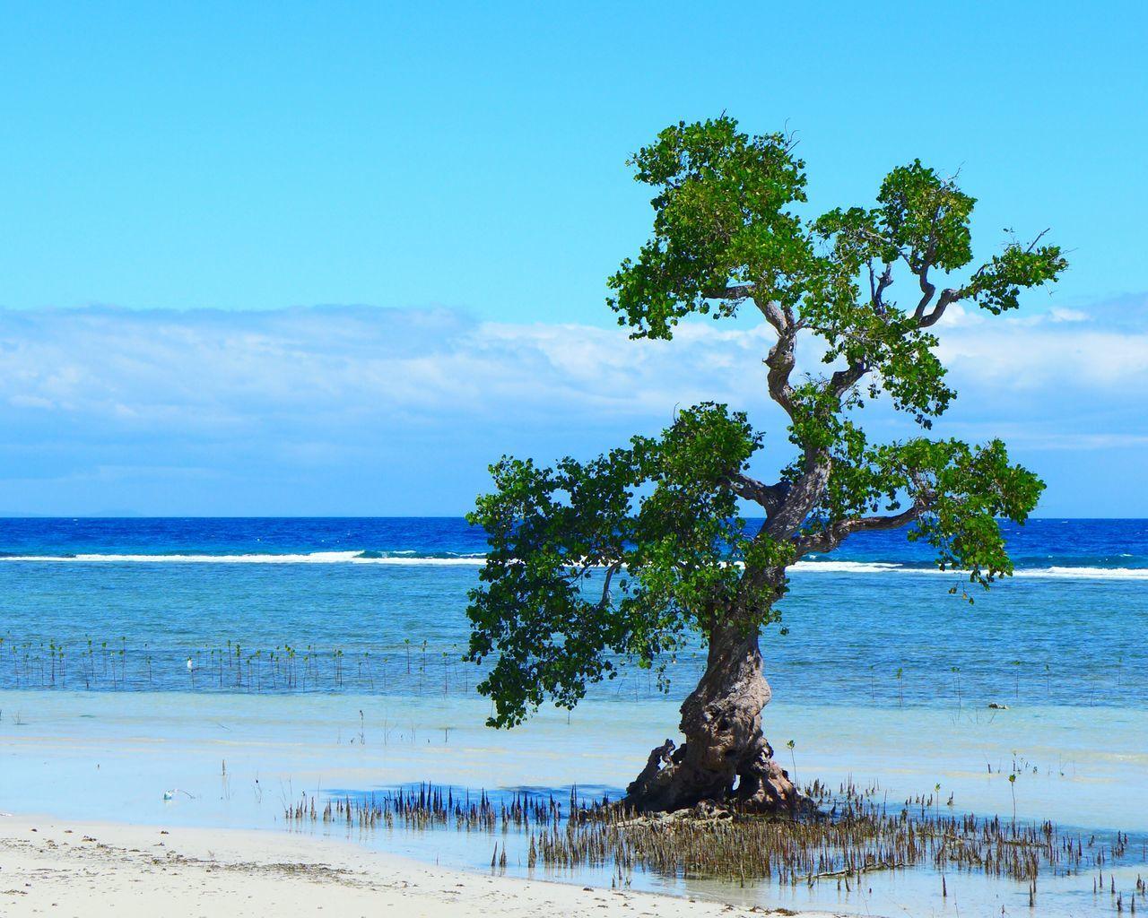 DMC-LX7 Mangrove Siquijor Philippines