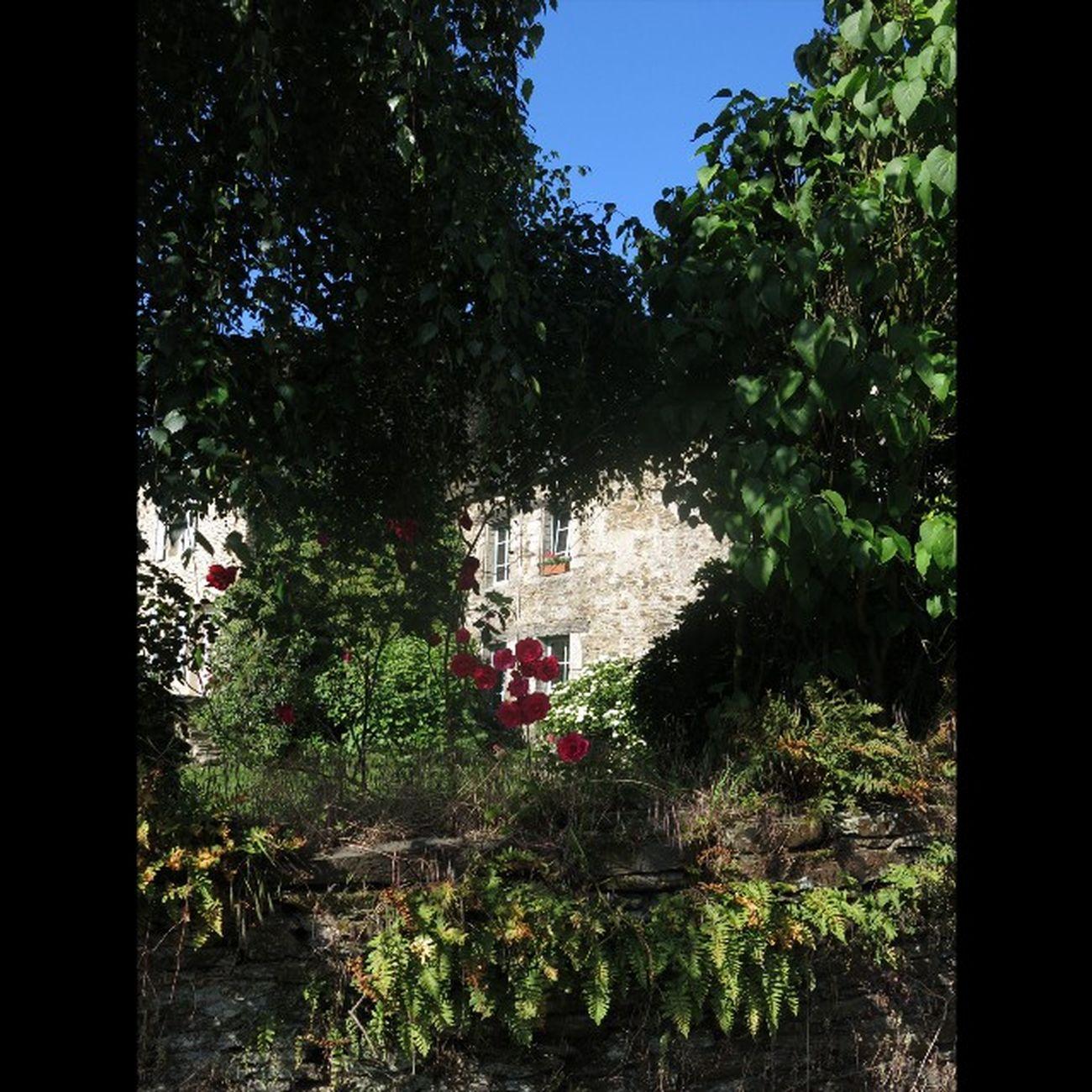 Une Maison du Vieuxbourg de Taupont (Juin 2014 ) A House in the Oldtown of Taupont (June 2014) Morbihan Miamorbihan Bretagne Breizh Fansdebretagne Jaimelabretagne Bretagnetourisme Latergram Architecture Plants Plantes Flowers Fleurs Arbres Trees Coeur  Heart