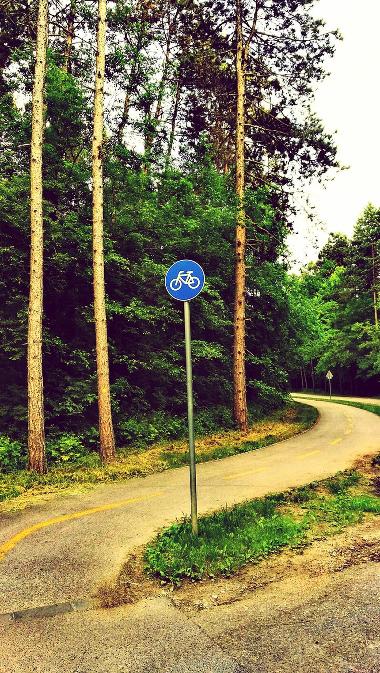 Road Sign Guidance Tree Road Outdoors No People Bicycle Bicycle Road Weekend Move Nature