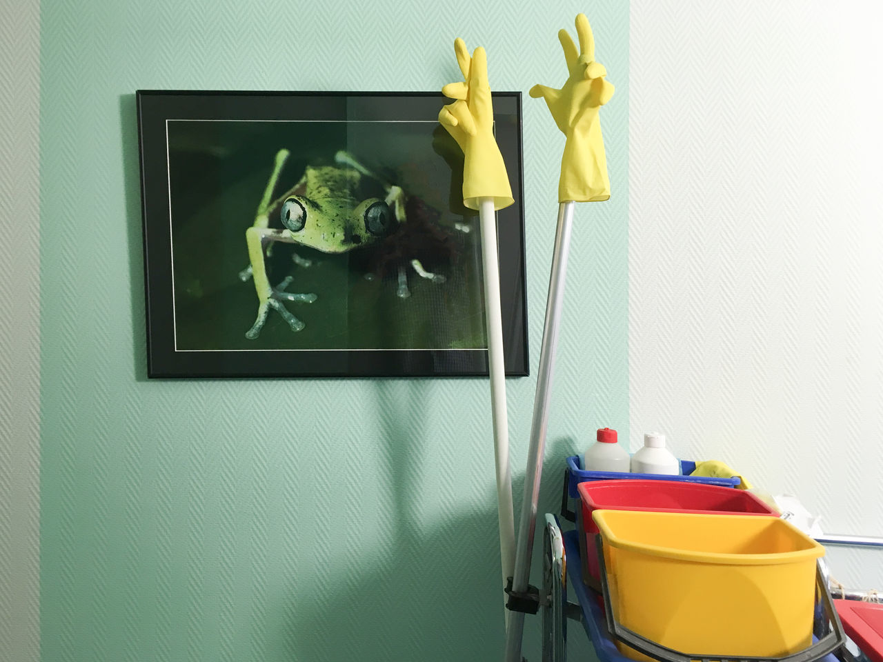 cleaning personnel left their supply :) Cleaning Service Corridor Frog Hospital Picture Rubber Gloves Still Life Trolley