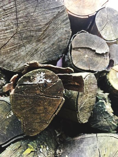 Wood Wood - Material Springtime