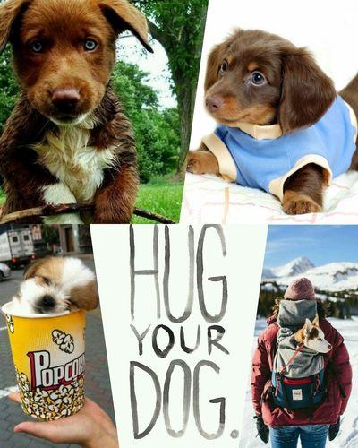 Hug your DOG ♡ Puppy Love Petstagram Animal Lovers