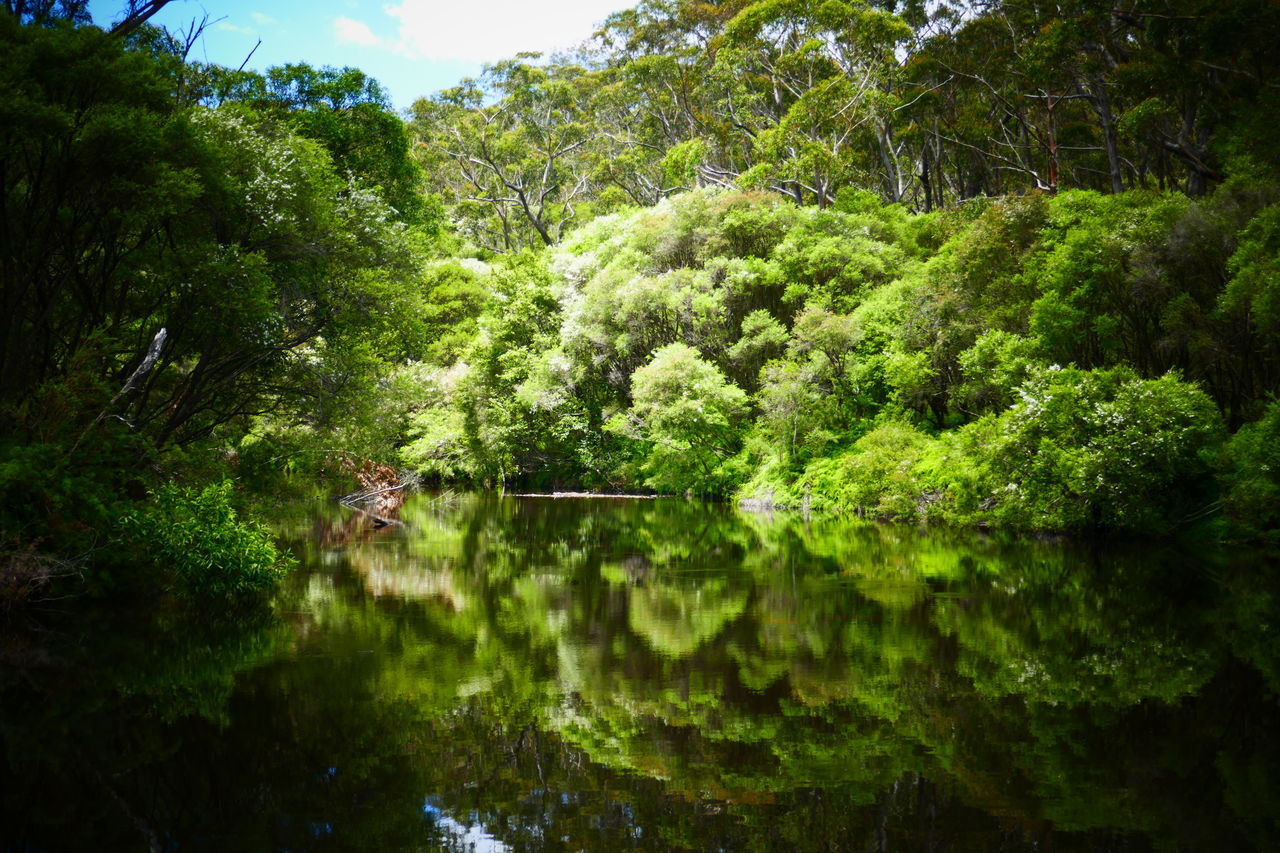 Australia Australian Landscape Bush Green Nature Nature Travel Reflection Reflections In The Water River Serinity Water EyeEmNewHere New South Wales  Travel Photography Australian Bush Landscape Tranquility No Filter Outdoors Tree Sunlight Beauty In Nature Scenics Low Angle View Australian Bushland