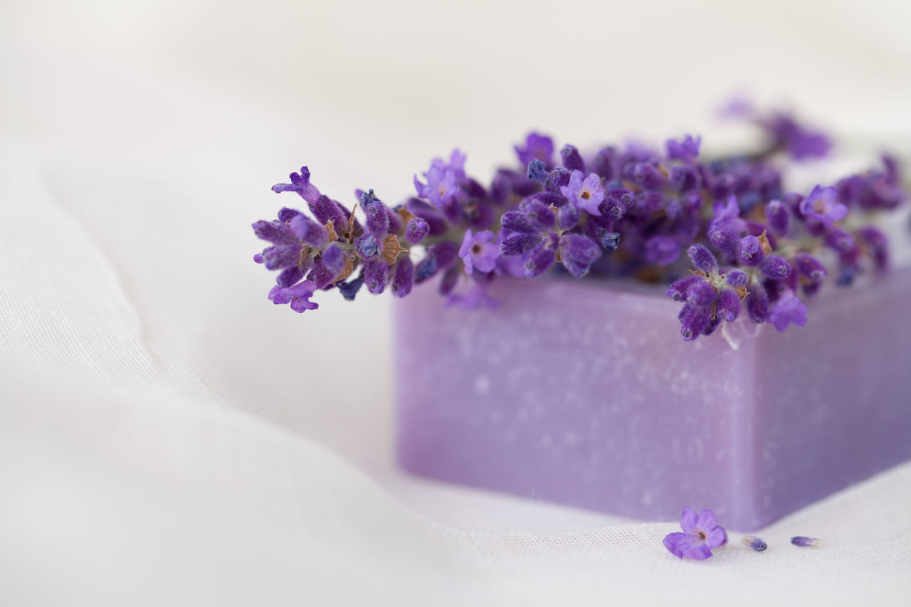 Lavender soap bar and fresh lavender flower Aromatherapy Copy Space Wellness Beauty In Nature Close-up Day Flower Flower Head Fragility Freshness Healthy Lifestyle Indoors  Lavender Nature No People Purple Selective Focus Smell Soap Bar Spa Studio Shot White Background