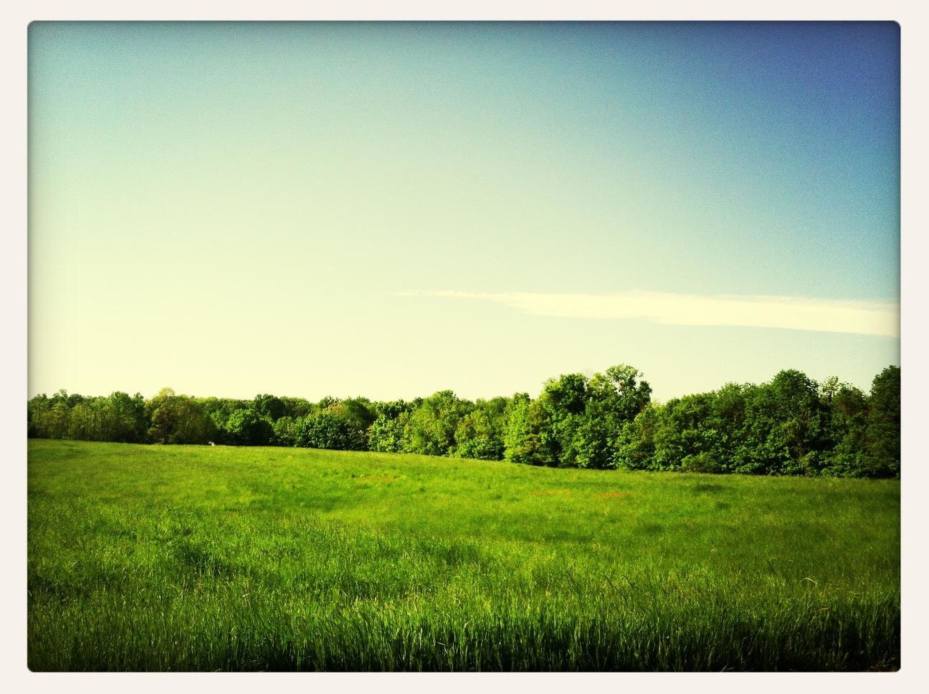 transfer print, tranquil scene, field, tree, tranquility, grass, landscape, clear sky, growth, beauty in nature, green color, scenics, copy space, nature, blue, auto post production filter, sky, grassy, green, plant