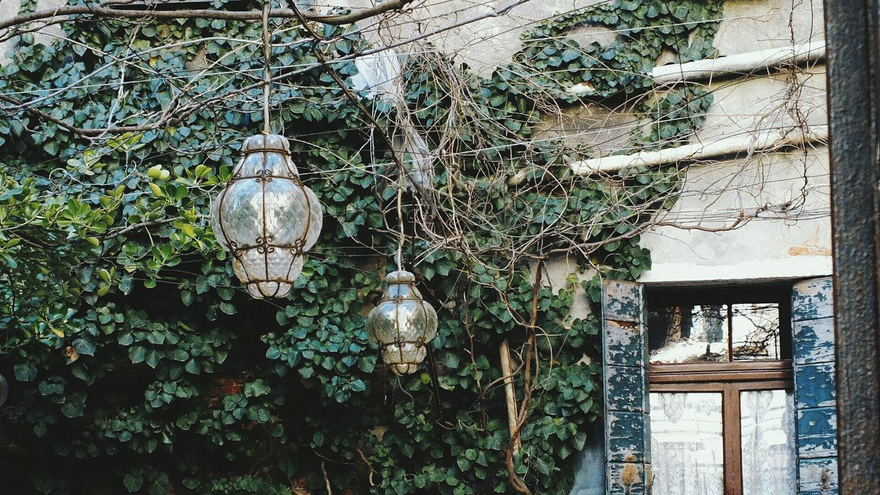 hanging, lighting equipment, no people, tree, day, plant, built structure, outdoors, lantern, architecture, leaf, branch, building exterior, nature, close-up