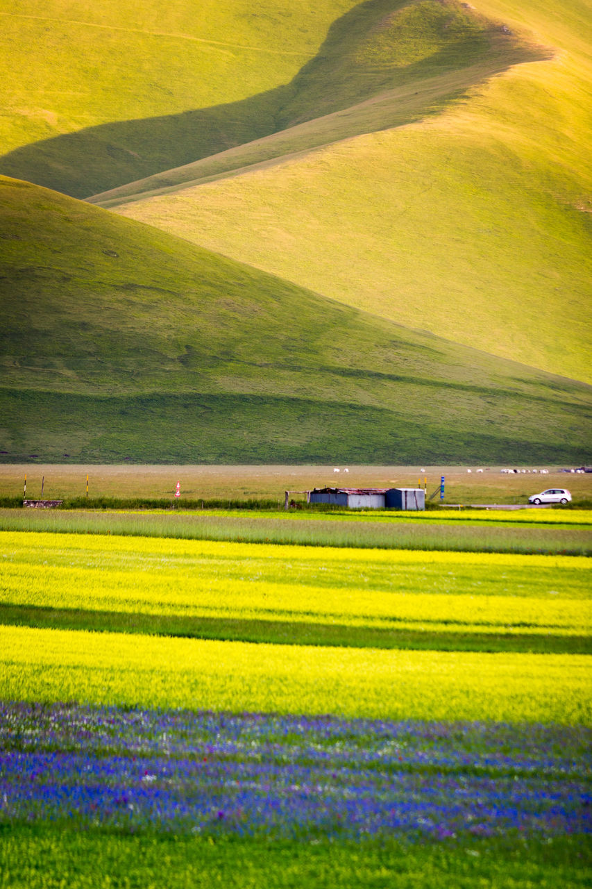 rural scene, field, agriculture, landscape, farm, nature, tranquil scene, beauty in nature, scenics, crop, yellow, outdoors, no people, growth, day, oilseed rape, green color, awe, cereal plant, patchwork landscape, grass, flower, freshness