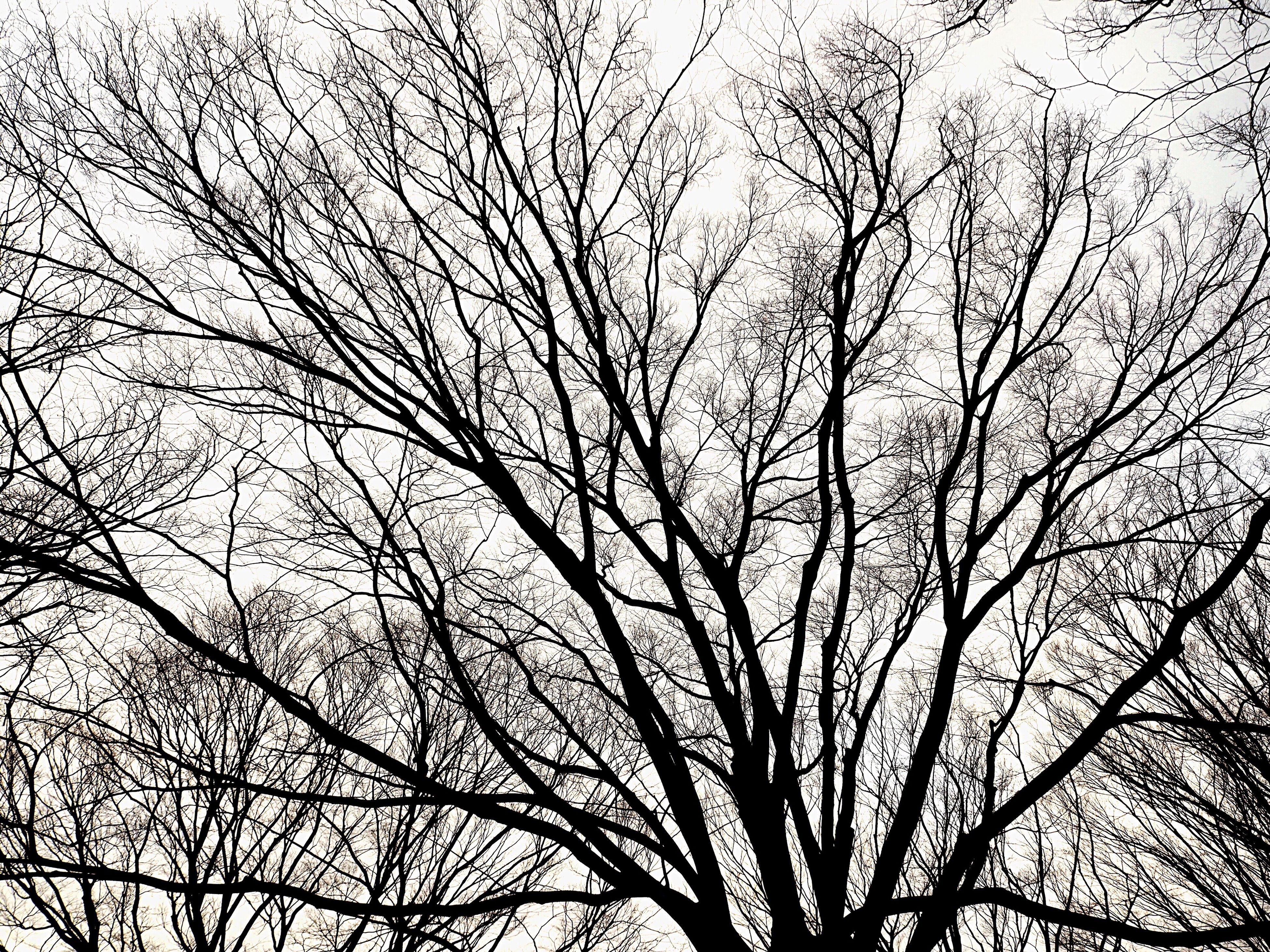 low angle view, tree, sky, no people, nature, outdoors, day, backgrounds, beauty in nature, animal themes