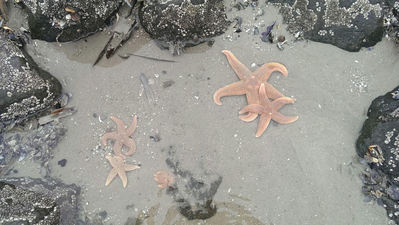 Starfish On Beach Between Rocks