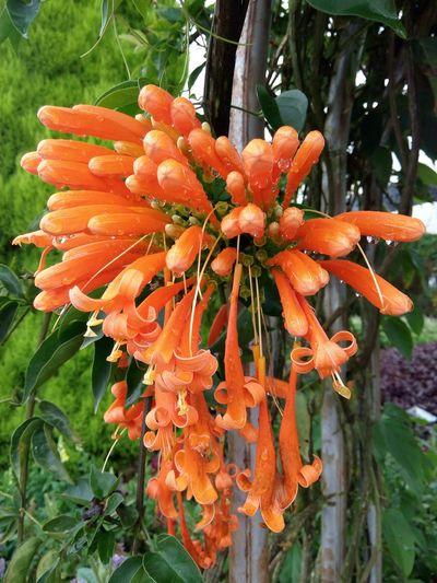 Cameronhighlands Nature Flower Farm