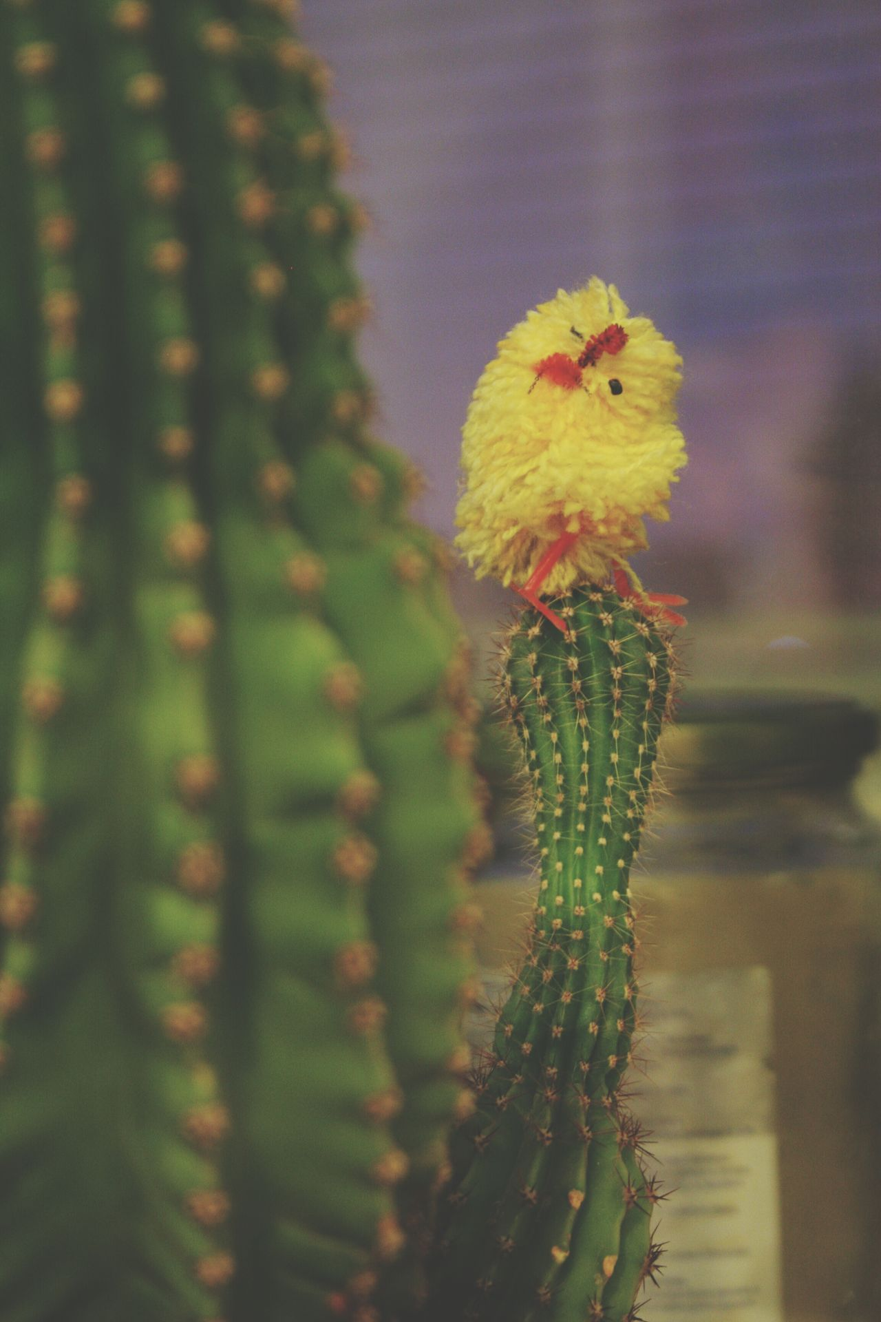 Beautiful stock photos of toys, Animal Representation, Bird, Cactus, Danger