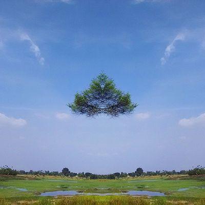 The SuperFlying Tree??? :D Instamirror Instacapture Bloggius Hucciofficial amazing abstract hosteltime coffeeyouneed instatrees tree trees mirror instatree